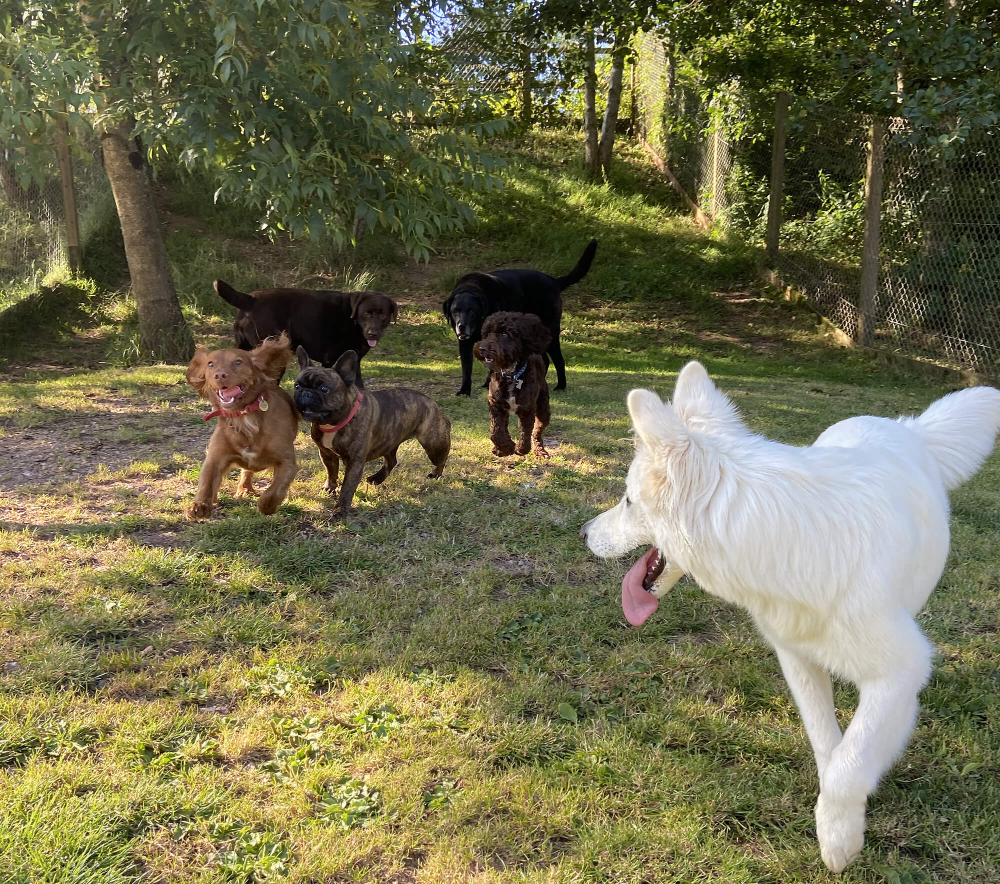 A group of happy dogs playing in a safe environment